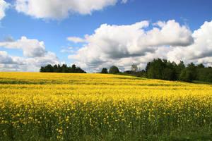 field by Denya7