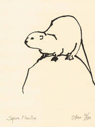Otter on a rock by Sophie Neville