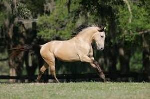 wild4horses's Profile Picture