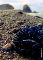 Mussels a limpet and the Rock by aoutramafalda