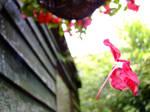 Falling petal by KaiOwen
