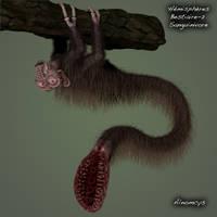 Hematophagus by Alnomcys