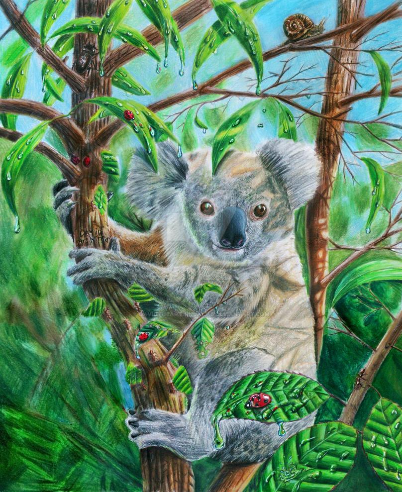 Koala by DavidTheArtNinja1345