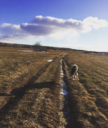 Dog Walk by mcorvec