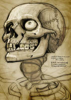 looking up skull by heckthor