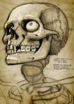 looking up skull