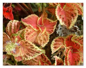 gigi's flowers - pt1