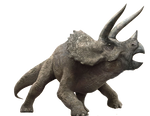 Jurassic World: Triceratops
