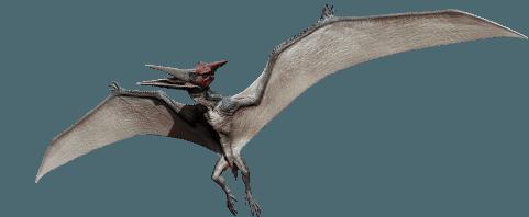 Jurassic World: Pteranodon by sonichedgehog2