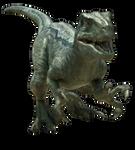Jurassic World: Velociraptor V4