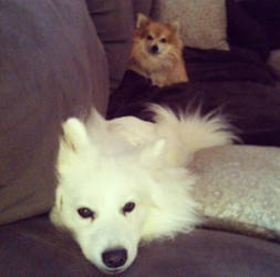 My puppies Ellie and Lucy! by jordansweeto