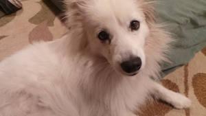 My puppy Ellie!! by jordansweeto