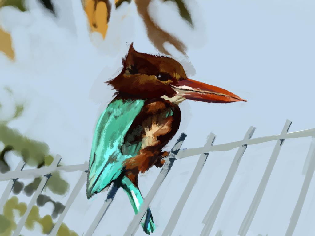 HARDWELLREVEALED2016: White-Throated Kingfisher by Hamsta180