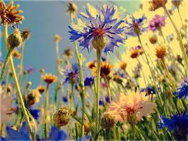 ::: Pastel Forest ::: by RafkinsWarning