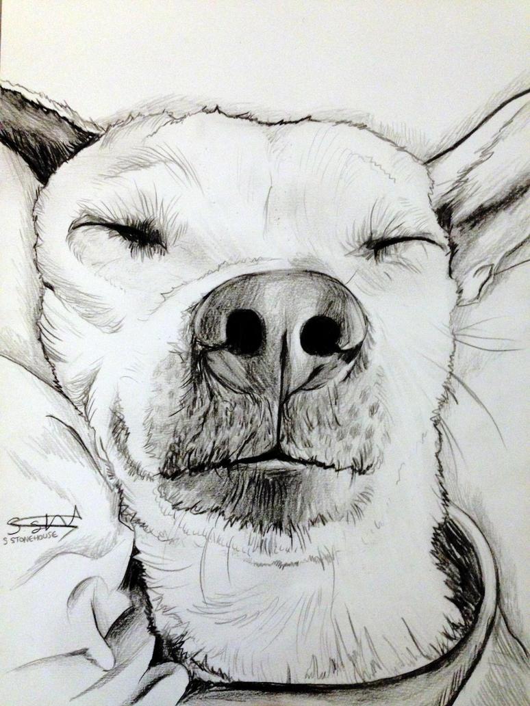 Bruce by ScenicSarah