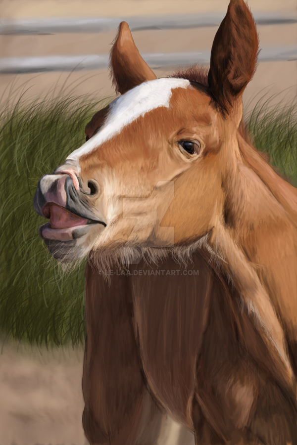 Little foal by Le-laa