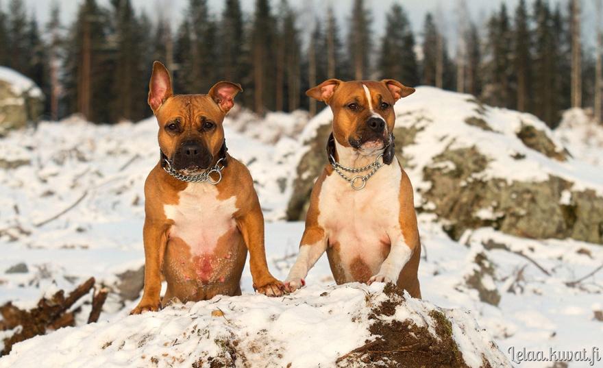 my dogsIIIII by Le-laa