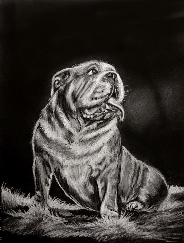 English Bulldog -drawing by Le-laa