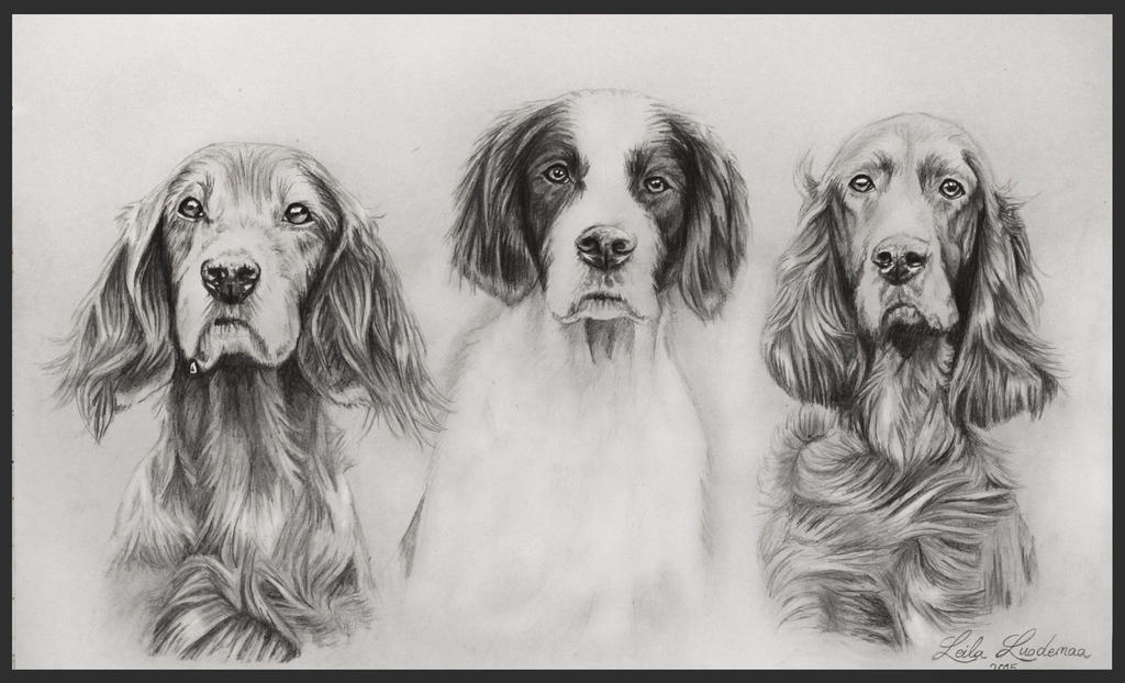 drawing of irishsetter by Le-laa