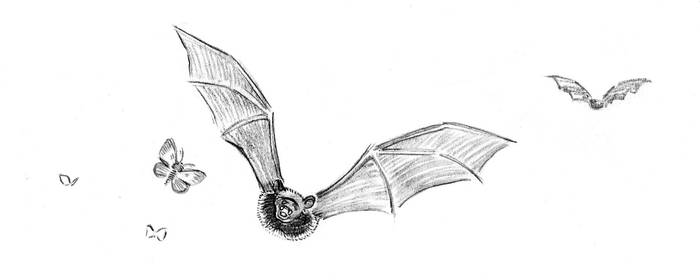 Bat and Moth (dinkus for Resonance) by tinycoward