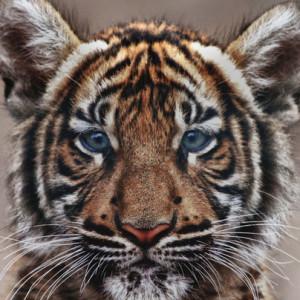 WaizuTora's Profile Picture
