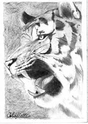 Tigre by Artoflette