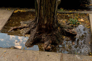 Base of a Tree by steeber