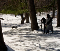 Photographers and Dog by steeber
