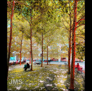 Trees of Lincoln Center