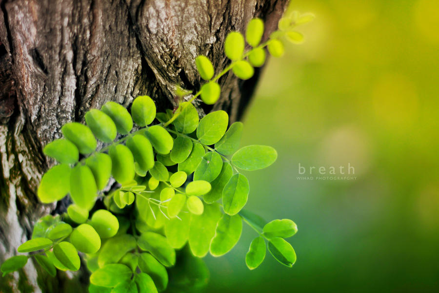 Warm green by wihad