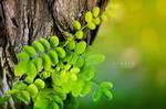 Warm green by wihad