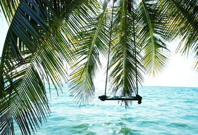 Tropical Swing Twitter Header By Waterfairy123 On Deviantart Create engaging twitter headers with the help of our professionally designed twitter header templates. tropical swing twitter header by