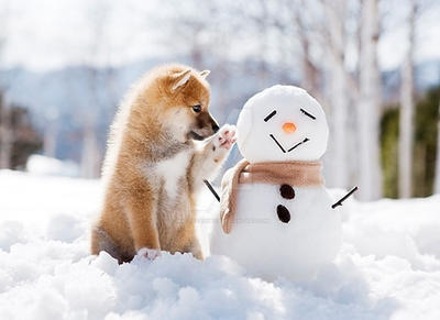 Cute, dog and snowman header by WaterFairy123