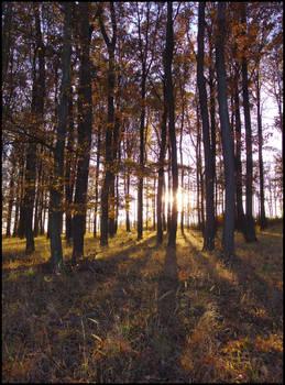 Autumn forrest sunset