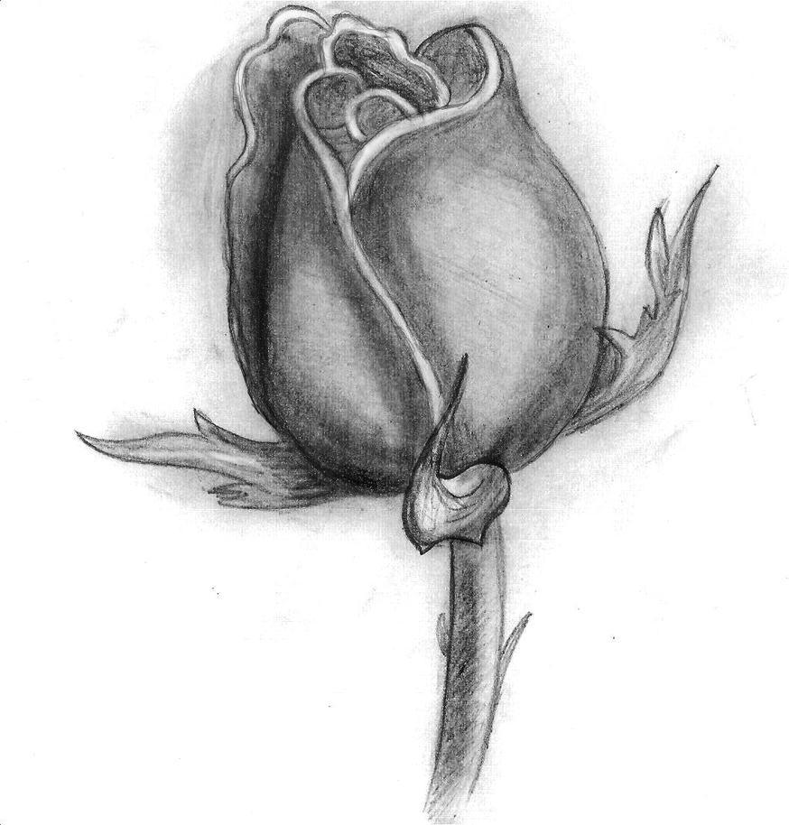 Rose Flower By Trixsmia On DeviantArt