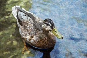 Wallpaper Female duck by Komaro28