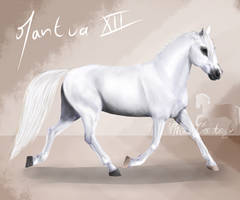 Mantua XII by The-White-Cottage