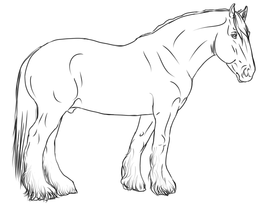 Clydesdale horse coloring pages ~ Shire free lineart by The-White-Cottage on DeviantArt
