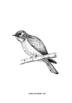 Cuckoo-Digital Sketch