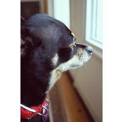 watchdog. by SPORADICstatic