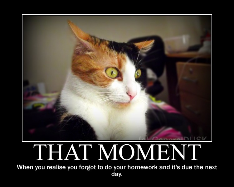 Cats Away Meme