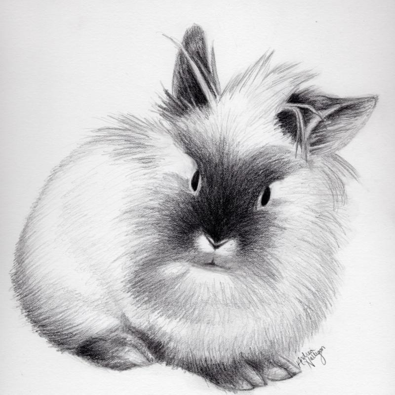 Lionhead Rabbit by ladyagate on DeviantArt