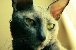 my cat again by dblg