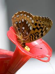 Not A Hummingbird by GoGoGodzirra