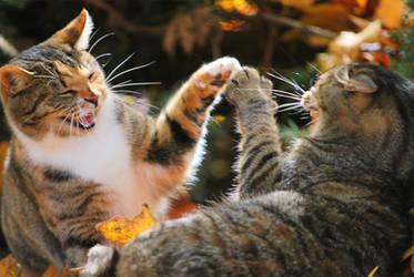 High 5 Cats by GoGoGodzirra