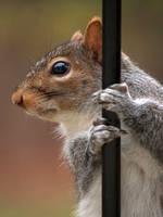 Stripper Pole Squirrel by GoGoGodzirra
