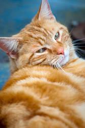 Orange Kitty Kitty by GoGoGodzirra