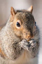 Squirrel Nom Nom by GoGoGodzirra