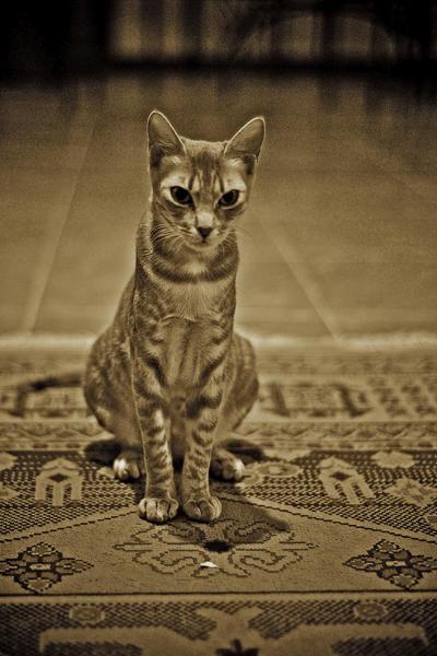 I'm Egyptian by Nile-Paparazzi