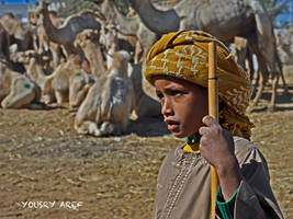 Camels boys